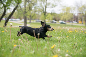 The dogs know: summer is here, and it's time to frolic!